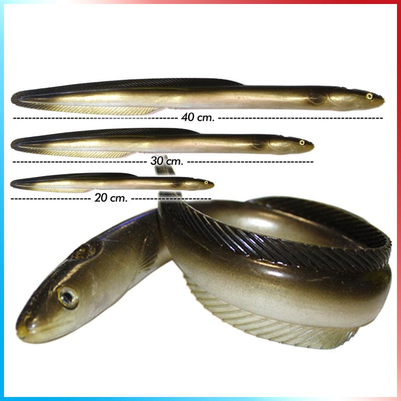 Anguille 20-30-40 cm.