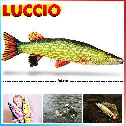 Luccio