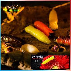 Caimano Worm 1.5