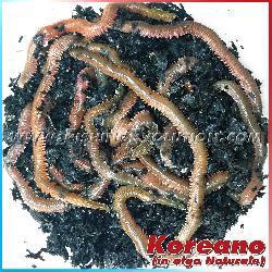 Koreano in Alga Naturale